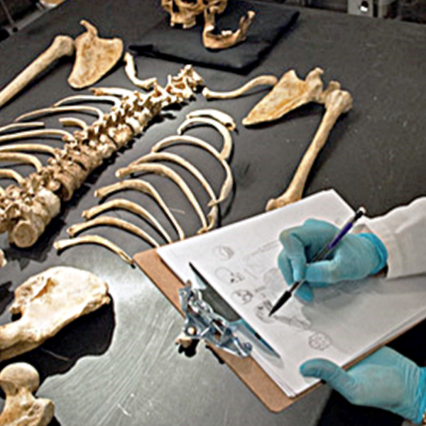 Gloved hands holding pen and clipboard with paper over skeletal remains on a table