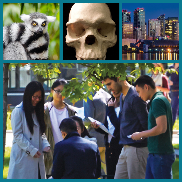 Collage of a lemur, a skull, a city skyline at night, and a group of students talking outside on the UTM campus.