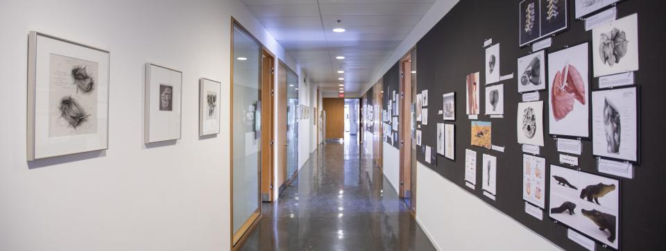 Interior hallway in the Terrence Donnelly Health Sciences Complex at the University of Toronto Mississauga Campus