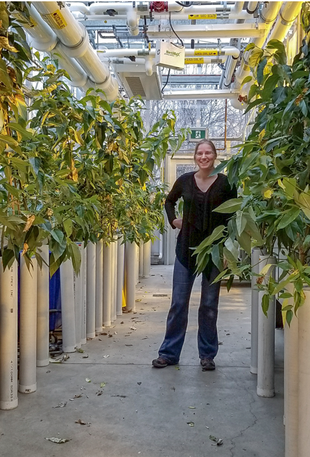 Katharina Braeutigam in the research greenhouse
