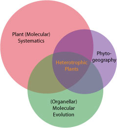 Venn diagram showing Dr. Stefanovic's research interests and how they relate to each other