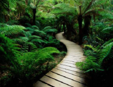 a path leading into the woods