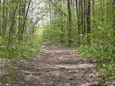 path through a wooded area