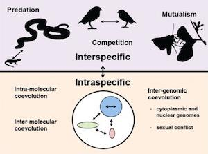 diagram showing coevolution at multiple levels of biological organization