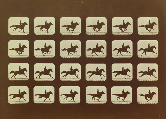 Series of still images showing the moving of a horse running with rider