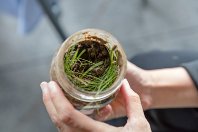 glass jar containing soil, grass and sticks