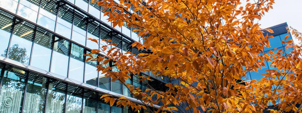 Exterior of UTM building and tree with fall foliage