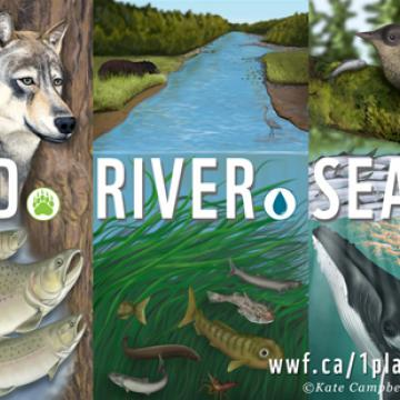 Rainforest and animal images from website designed by Kate Campbell