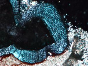 The wavy appearance of the enamel of Changchunsaurus in thin section and under cross-polarized light.