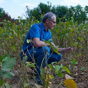 Professor Gary Crawford examines soybean plants in China