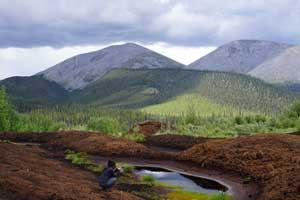 Photo of a Yukon landscape. In the background are mountains covered in pine forest. In the foreground, a scientist wearing mosquito nets takes a photo of peat vegetation.