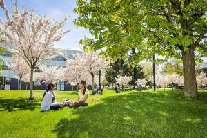 Two students sitting under cherry trees in bloom