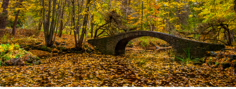 Picture of the bridge on Principal's Road in the Fall